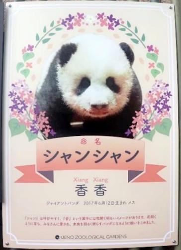 Bảng tên của Shangshang, được đặt tên với mong muốn sẽ trở thành một chú gấu rạng ngời như hoa, được mọi người yêu mến và có một tương lai tươi sáng.
